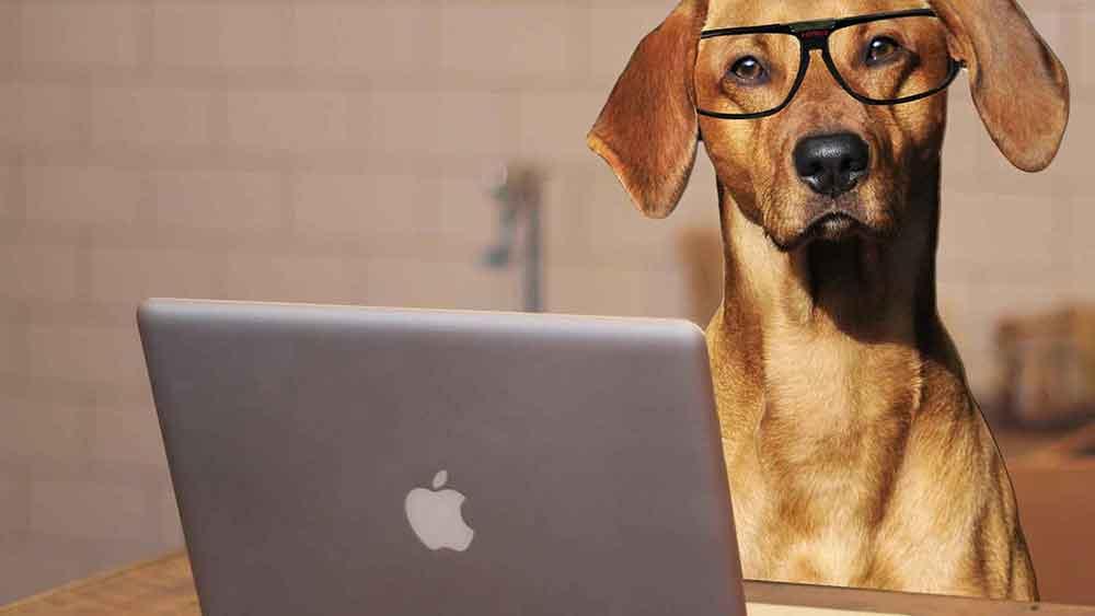 web design expert 1